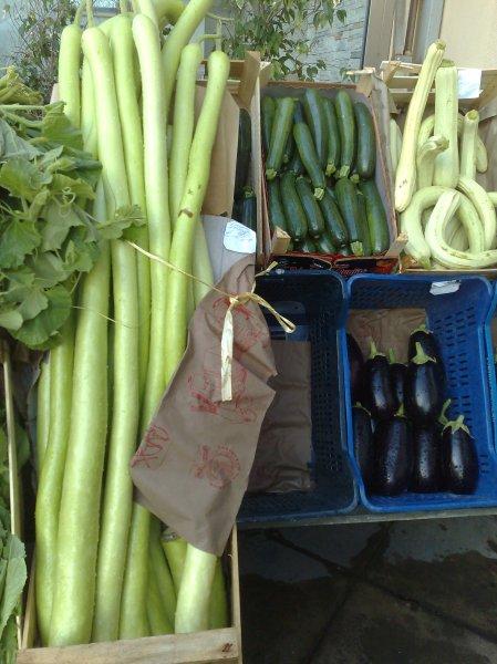 courgette varieties