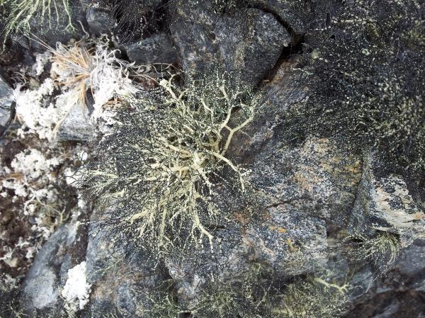 Im liking this lichen