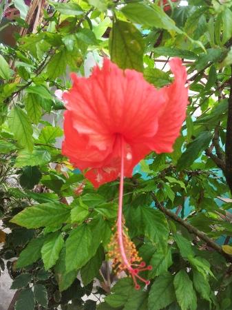 Nice bloomer